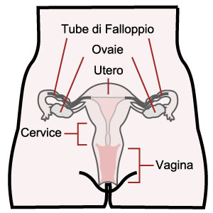 Schema della vagina vista frontale