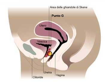Schema della vagina vista laterale